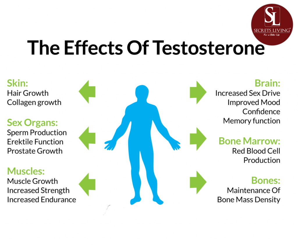 The Effects Of Testosterone
